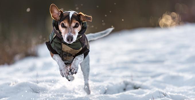 Protéger mon chien du froid