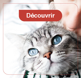 chat-friandise