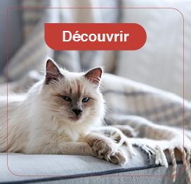 chat-hygiène-soin