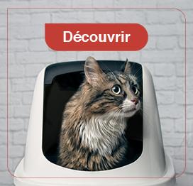 chat-litière