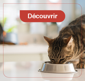 chat-alimentation