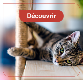 chat-education