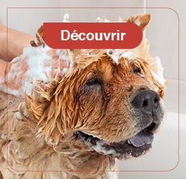 chien-hygiène-soins
