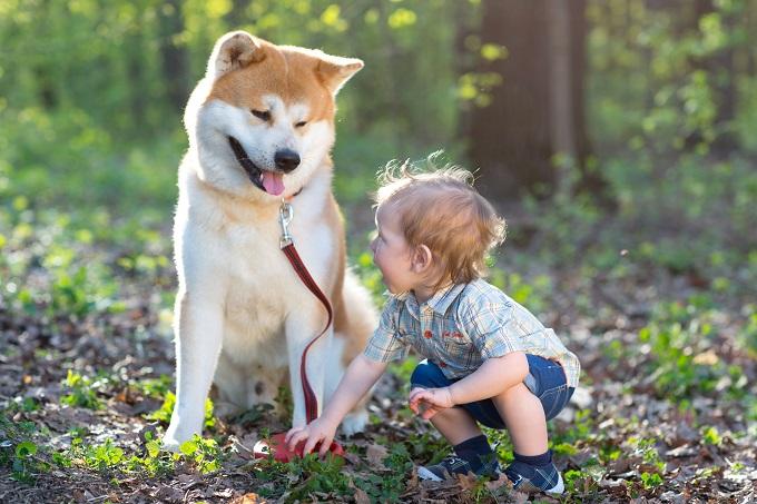 Complicité chien et enfant