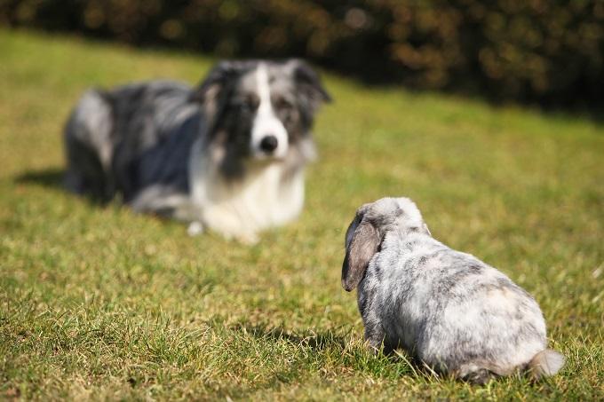 Sociabiliser son chien avec d'autres animaux