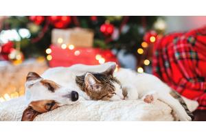 Un Noël sans embûche avec votre chat ou votre chien