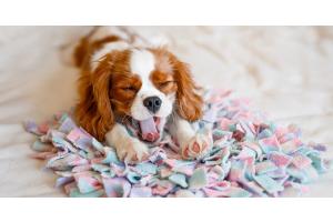 Quel chien adopter pour la première fois ?