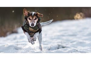 Astuces pour protéger mon chien du froid