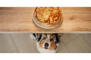 Les aliments à ne pas donner à mon chien