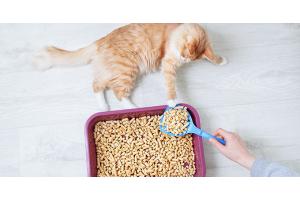 Comment entretenir la litière de mon chat