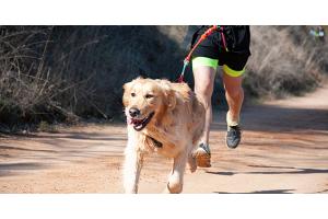 Quelles activités sportives faire avec son chien ?