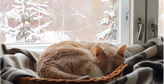 protéger mon chat du froid
