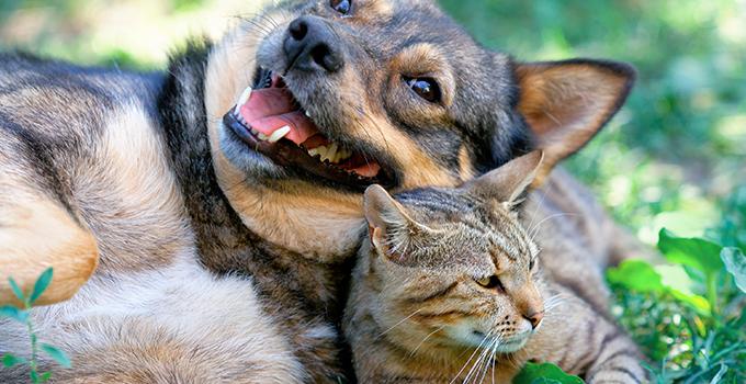 Comment débarrasser son chien ou son chat des puces tiques ?