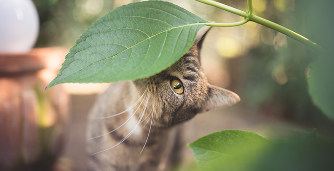 Plantes toxiques pour les chats