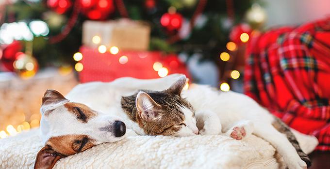 5 conseils pour un Noël sans embûche avec votre chat ou votre chien
