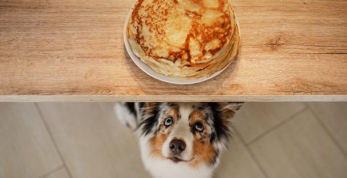 Quels sont les aliments à ne pas donner à mon chien ?