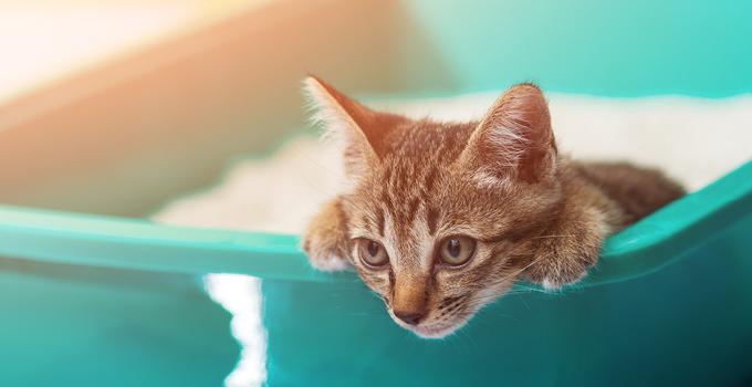 Quelle litière choisir pour mon chat ?