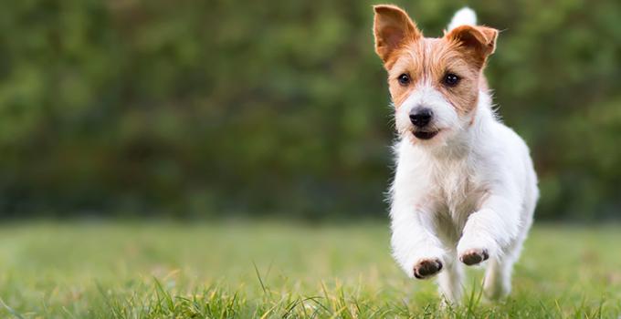 Quels sont les besoins en exercice physique de mon chien ?