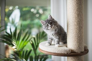 10 idées pour occuper mon chat pendant mon absence