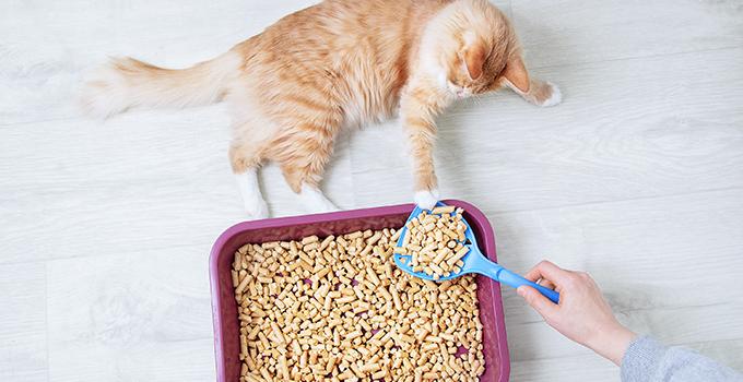 Comment entretenir la litière de mon chat ?