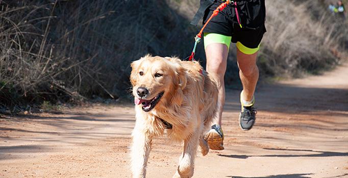 Canicross, agility, ... : quelles activités sportives faire avec son chien ?