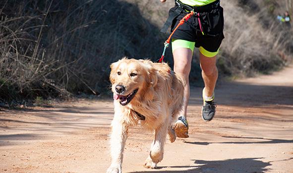 Quelles activités sportives faire avec son chien